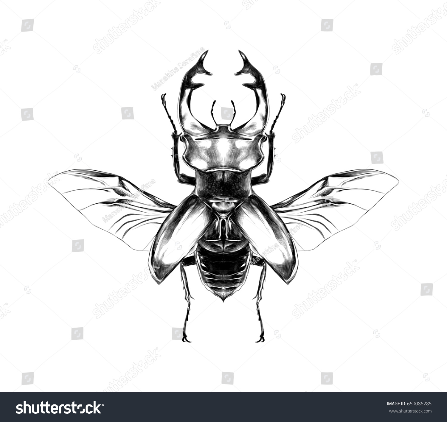 stag beetle open wings flying top stock illustration 650086285