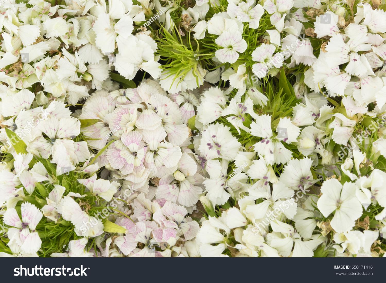 White Orchid Background Ez Canvas