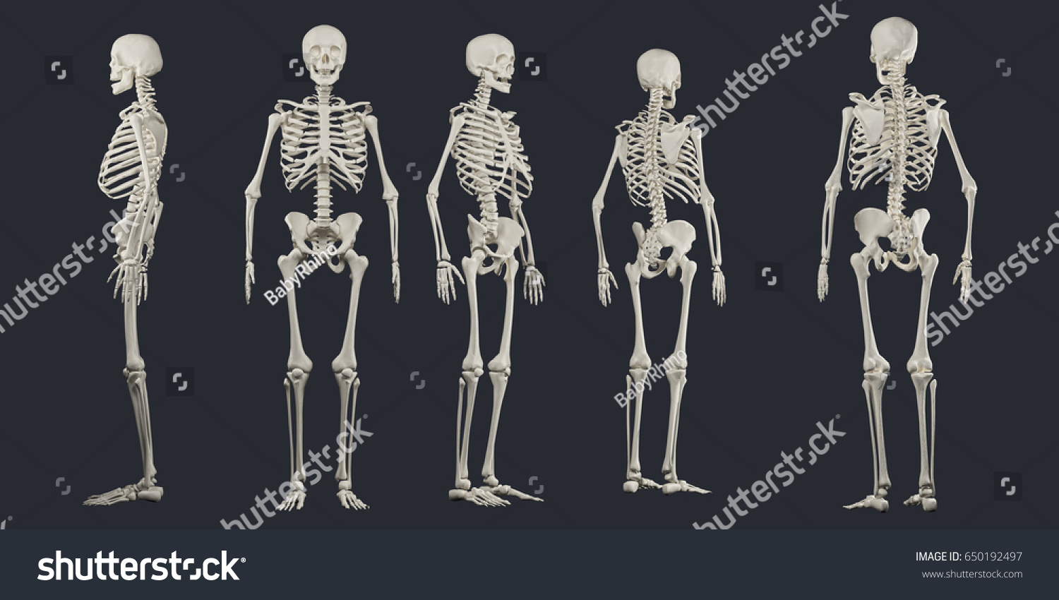 skeletal human anatomy current event The human anatomy consists of two parts the macroscopic anatomy and the microscopic anatomy it is a more than 1000 year old discipline.