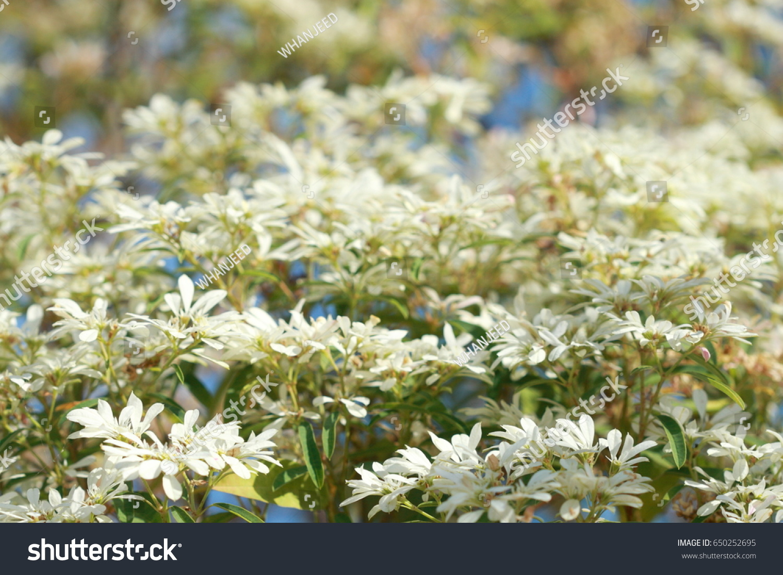Bush little white flower on tree stock photo 650252695 shutterstock bush of little white flower on tree and nobody for background mightylinksfo Images