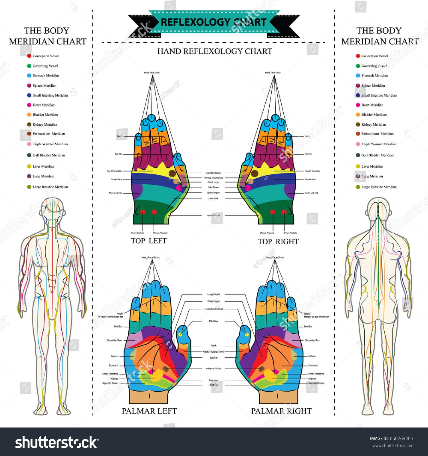 Reflexology Chart Body Anatomy Head Toe Stock Vector (Royalty Free ...