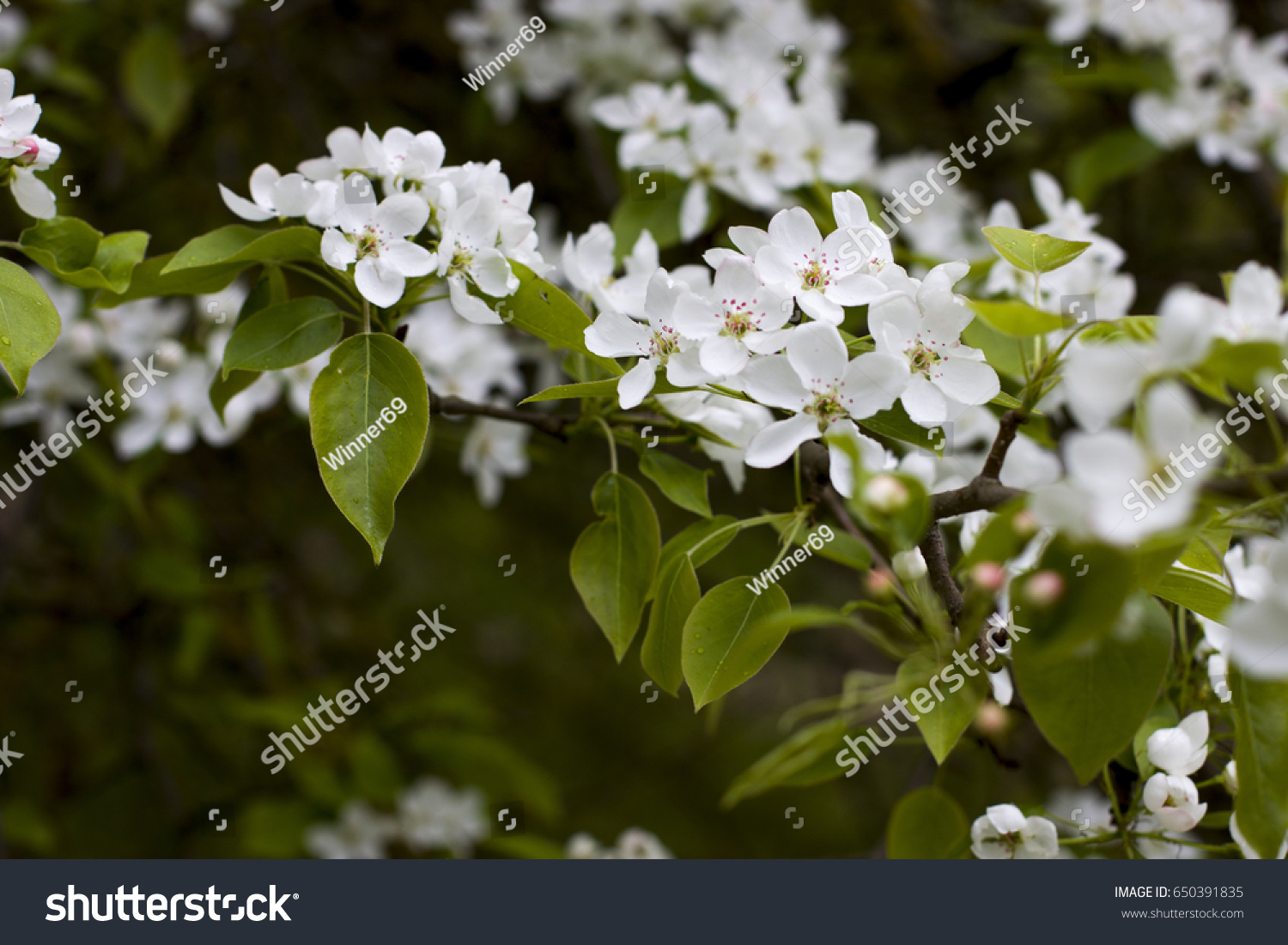 White Flowering Flowers In The Spring In The Forest Garden Ez Canvas