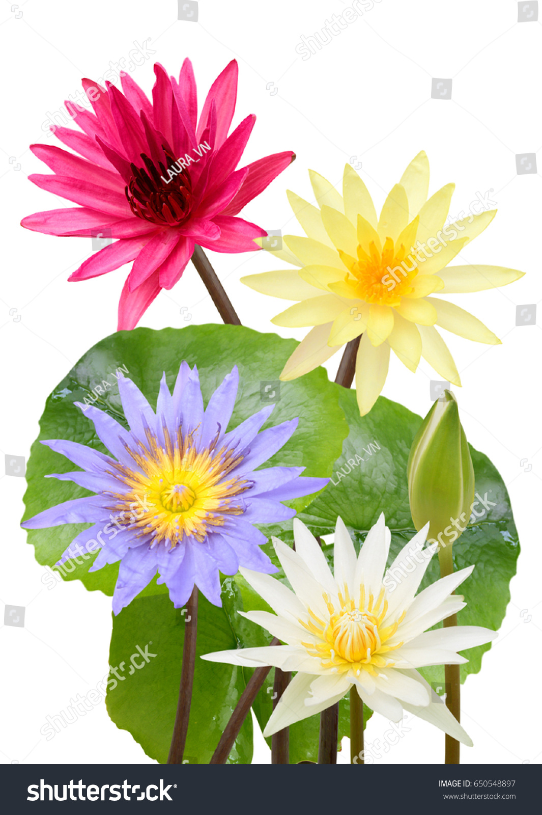 Beautiful Water Lily Flower Bouquet Isolated Stock Photo Edit Now