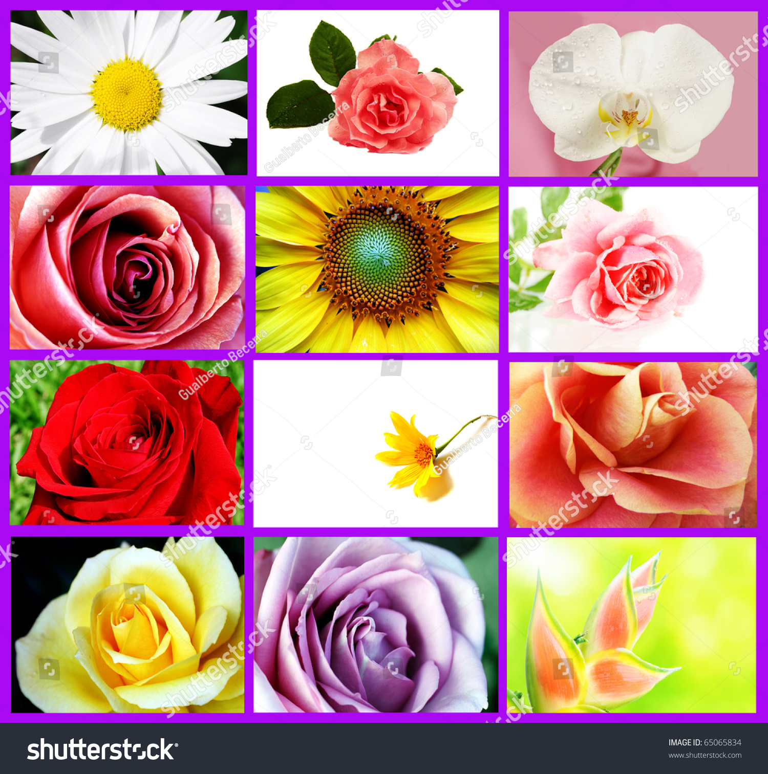 Several Types Beautiful Flowers Collage Stock Photo Edit Now