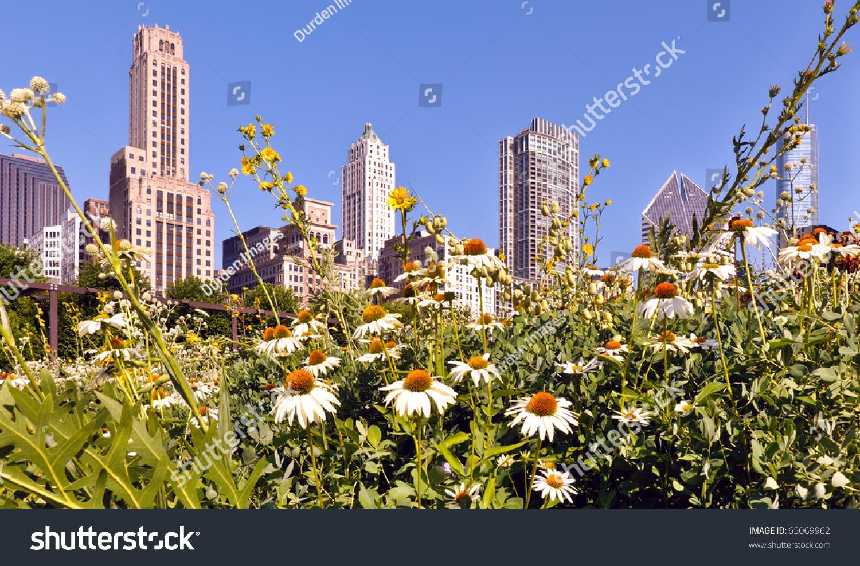 Juxtaposition urban nature garden daisies against stock for Urban nature