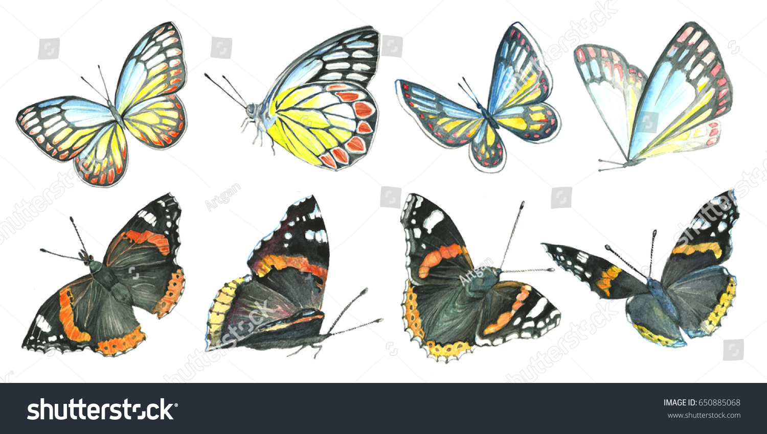 set butterflies watercolor drawing insects handmade stock