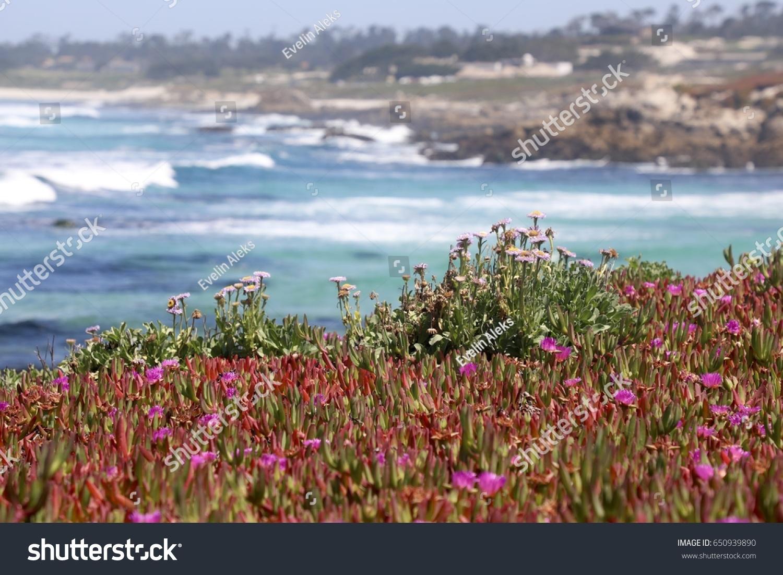 Spring flowers by beach california carmel stock photo edit now spring flowers by the beach in california carmel area pacific ocean mightylinksfo