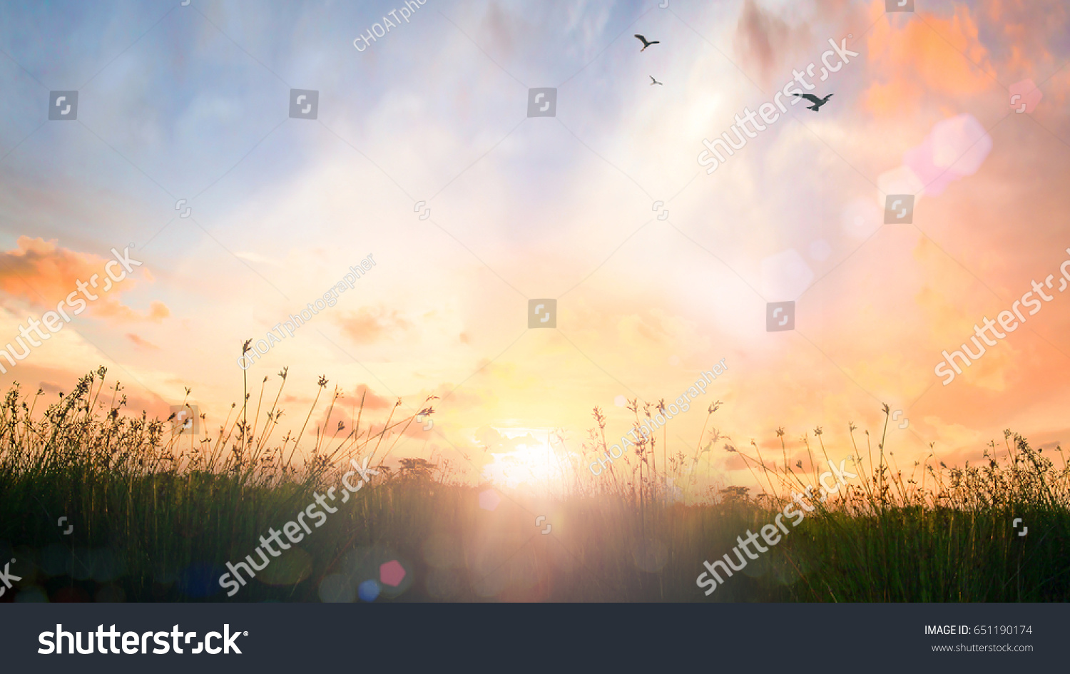 World environment day concept: Calm of country meadow sunrise landscape background #651190174