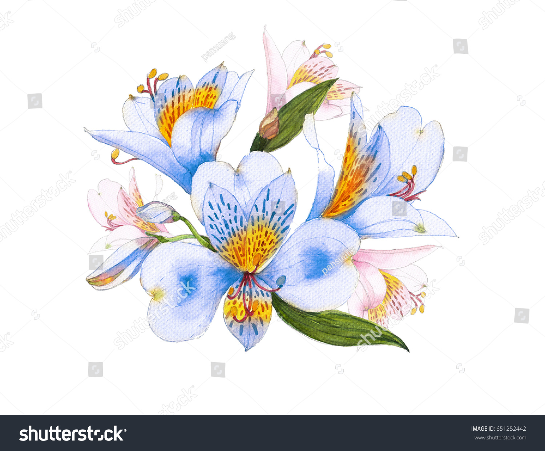 Blue alstroemeria flower watercolor stock illustration 651252442 blue alstroemeria flower watercolor izmirmasajfo