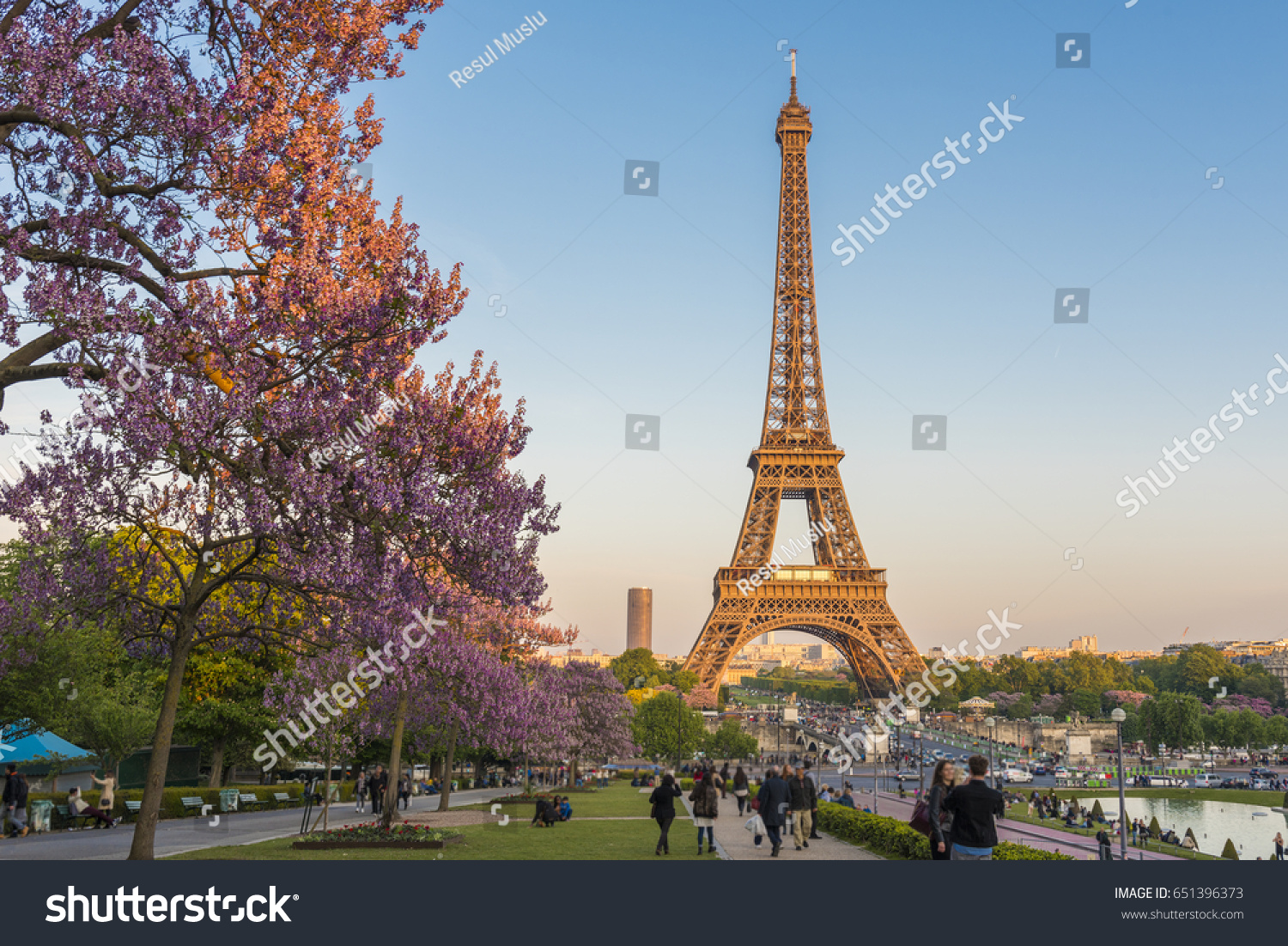 Eiffel Tower Magnolia Flowers Spring View Stock Photo Edit Now