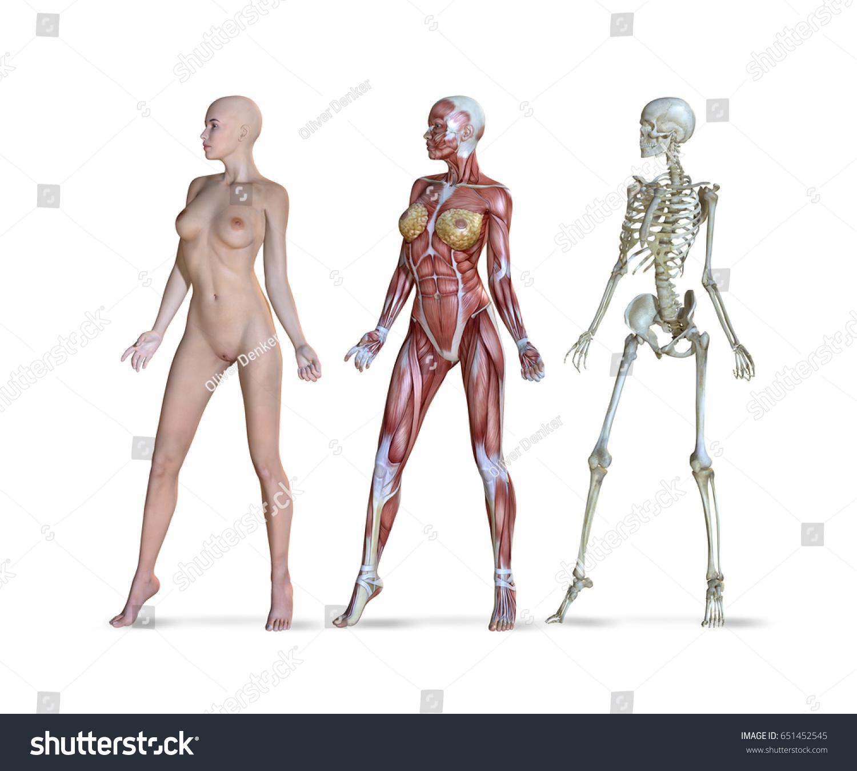 3 D Illustration Female Anatomy Three Different Stock Illustration