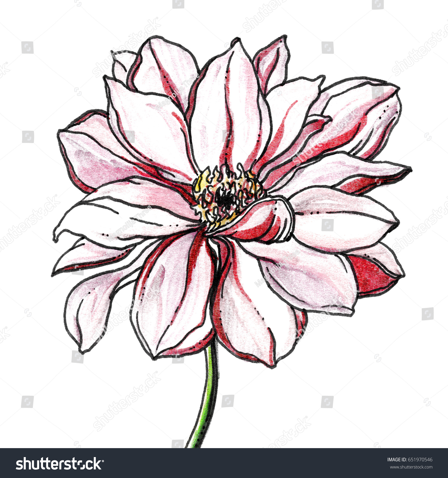 Red White Passion Hawaiian Dahlia Flower Stock Illustration