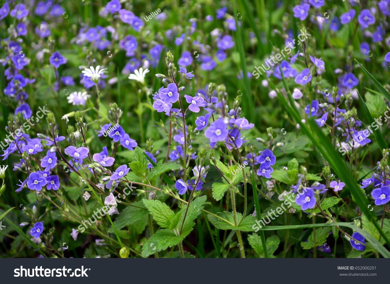 Blue Flowers Ez Canvas