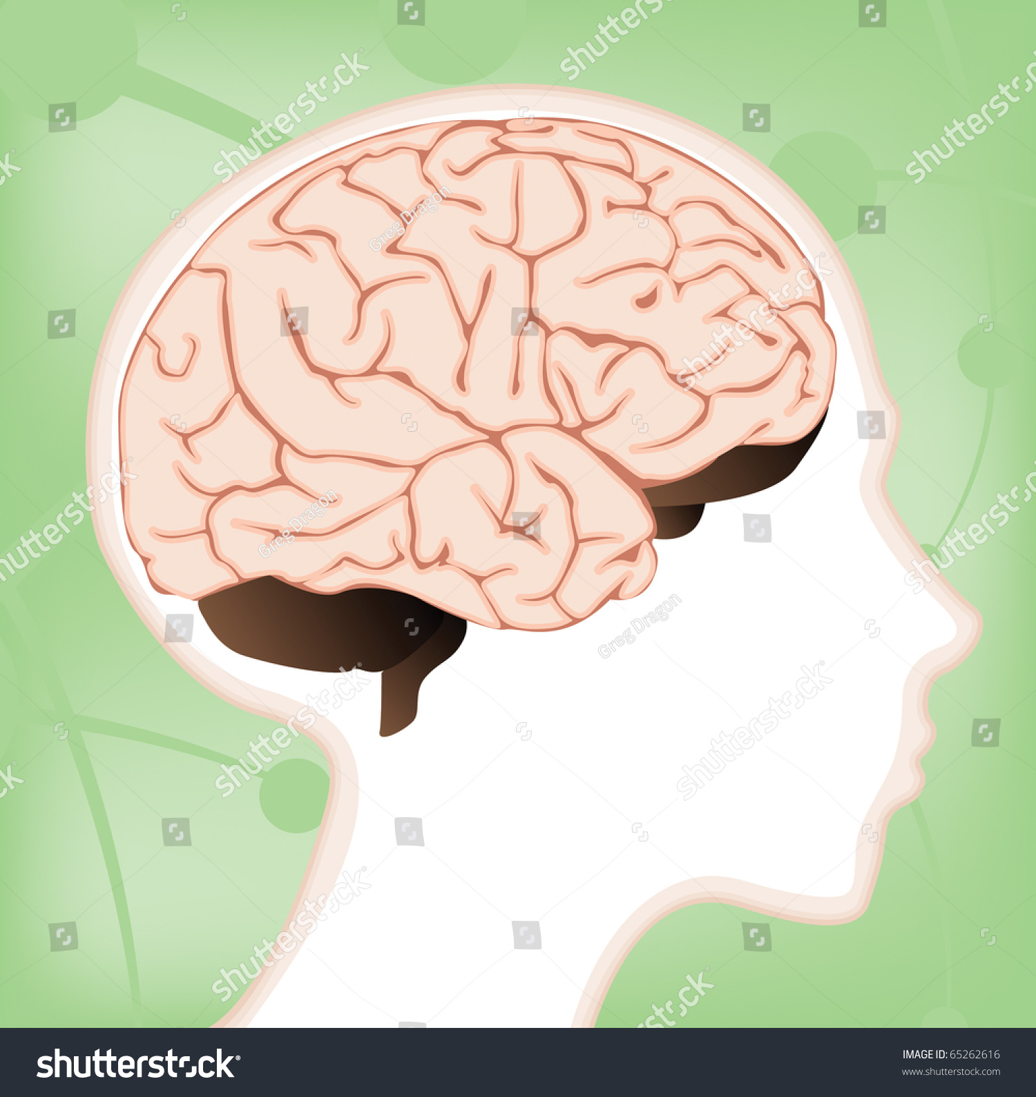a vector brain diagram within a child    s head with lobes and    save to a lightbox