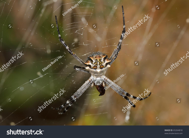 colorful spider on web | EZ Canvas