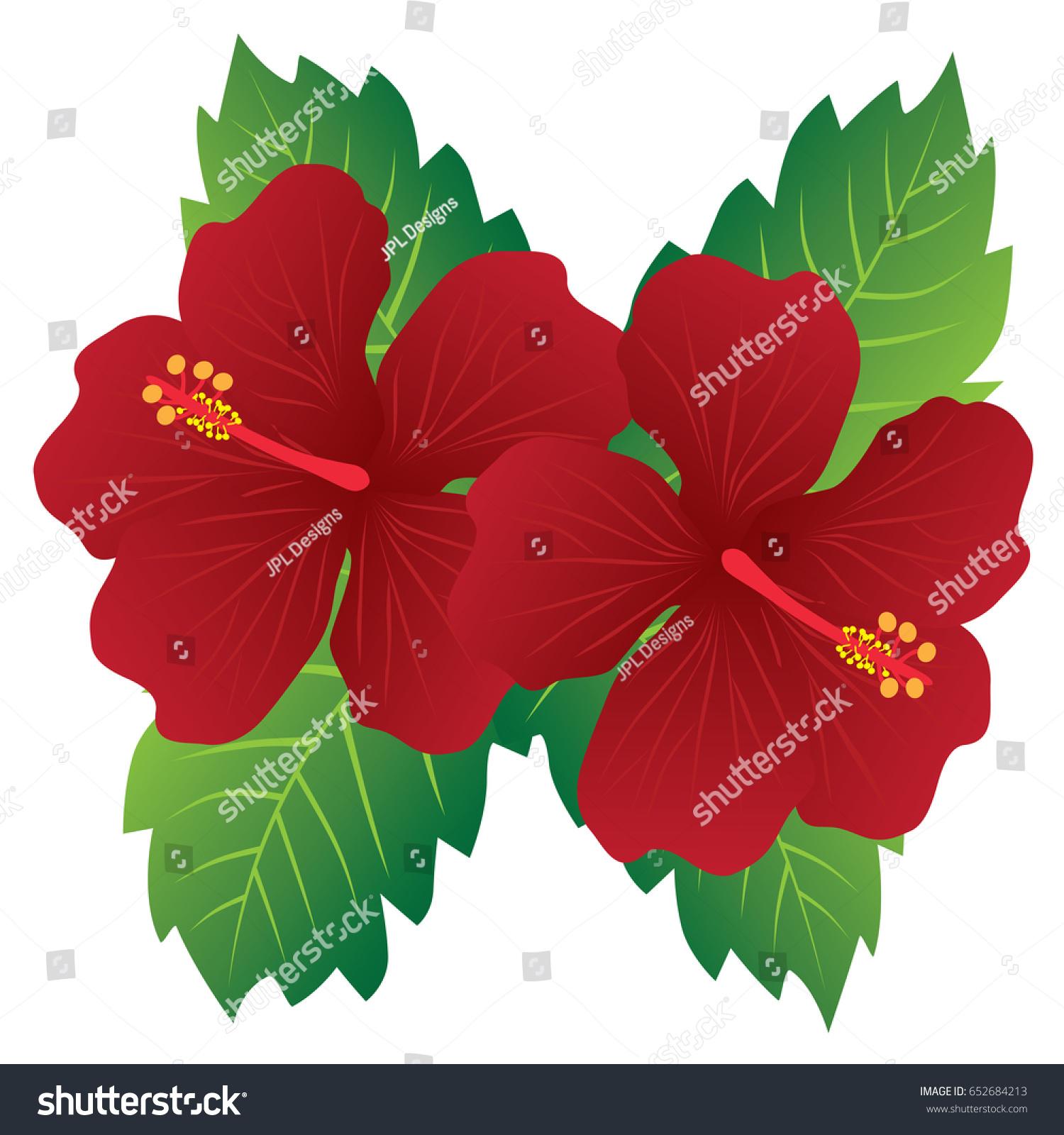 Malaysia national flower red hibiscus flowers stock photo photo malaysia national flower red hibiscus flowers with leaves vector illustration izmirmasajfo