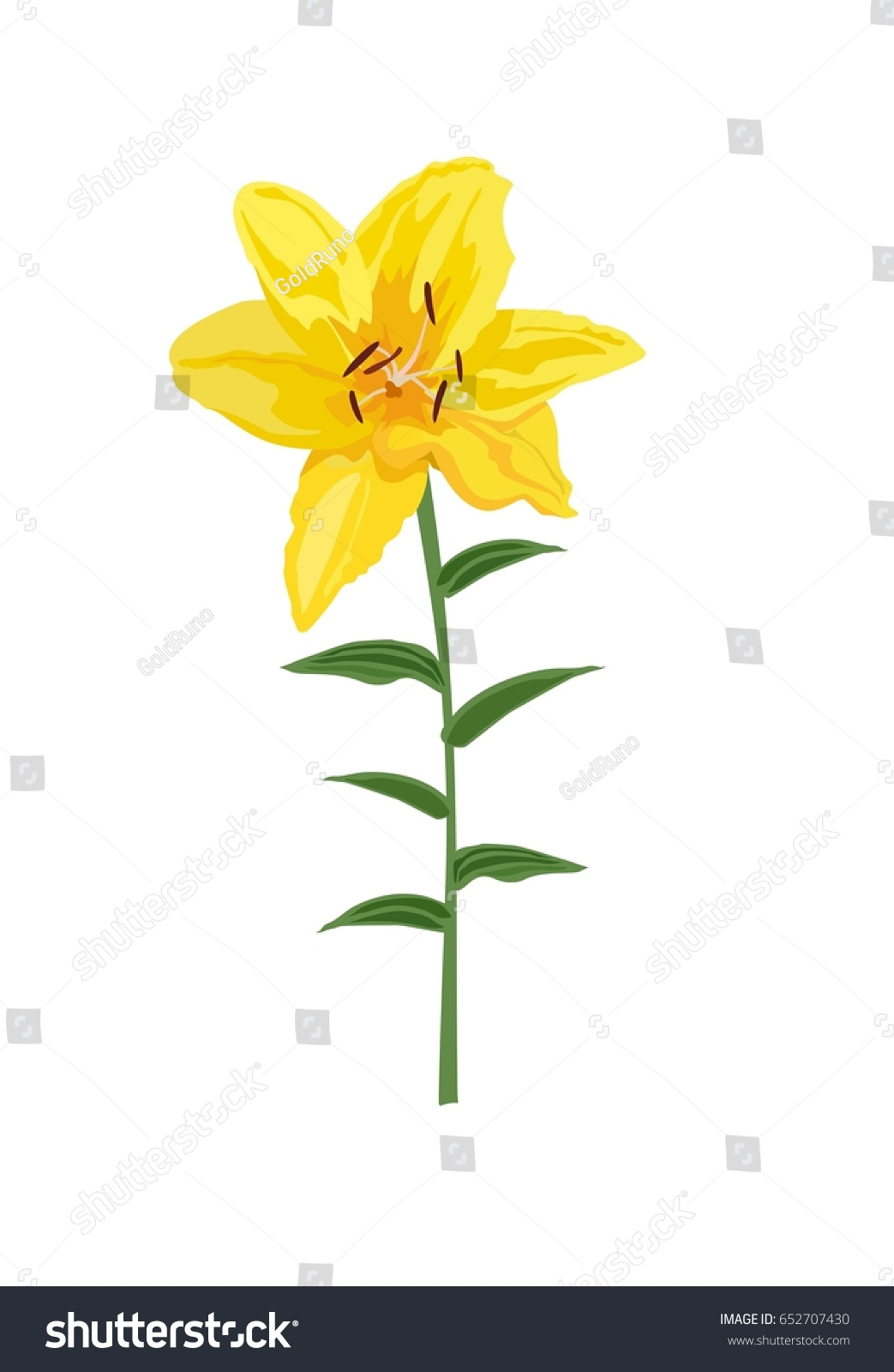 Closeup Hand Drawn Yellow Lily Flower Isolated On White Background