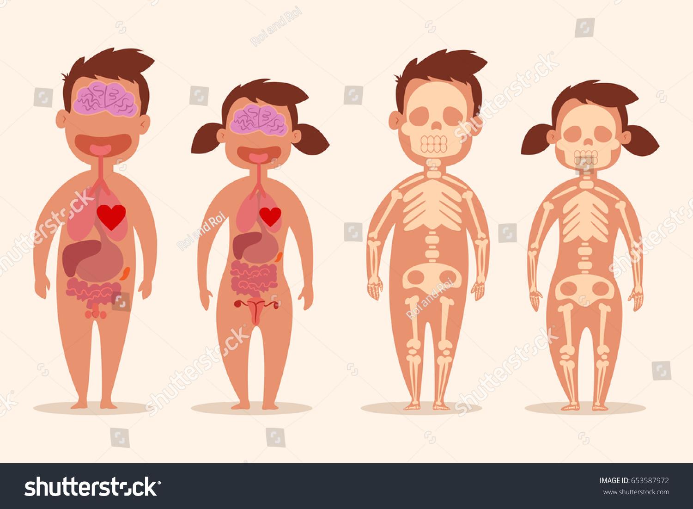 Human Internal Organ Male Female Skeletons Stock Vector Royalty
