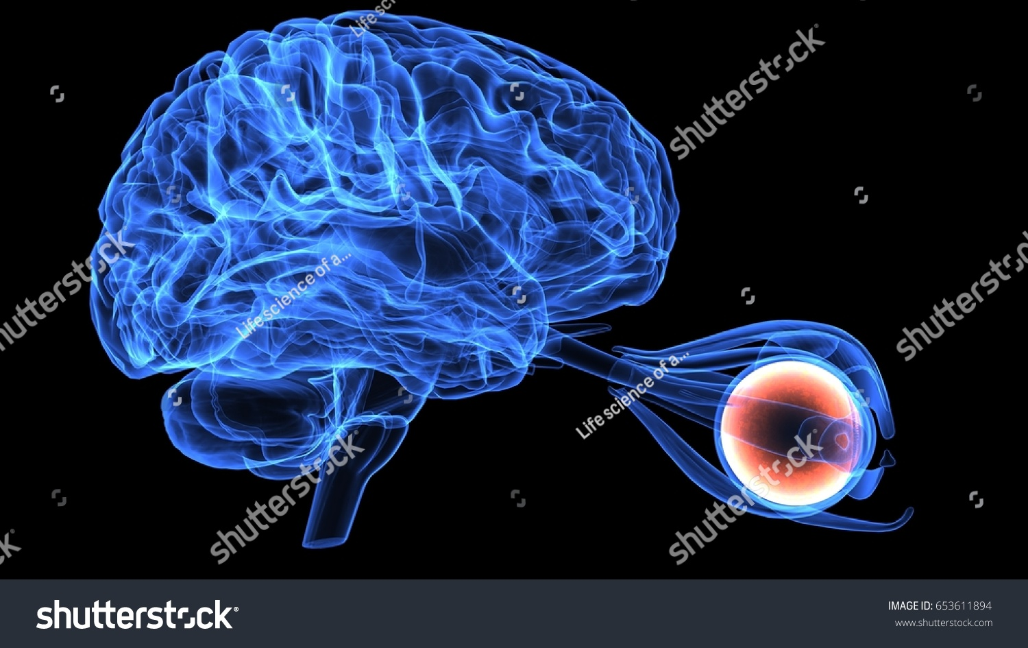 3 D Illustration Human Eye Anatomy Stock Illustration 653611894