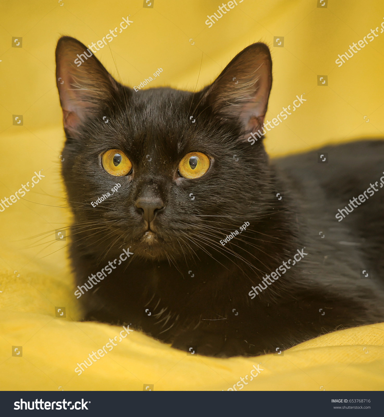 Black Cat On Yellow Background Stock Photo Edit Now 653768716
