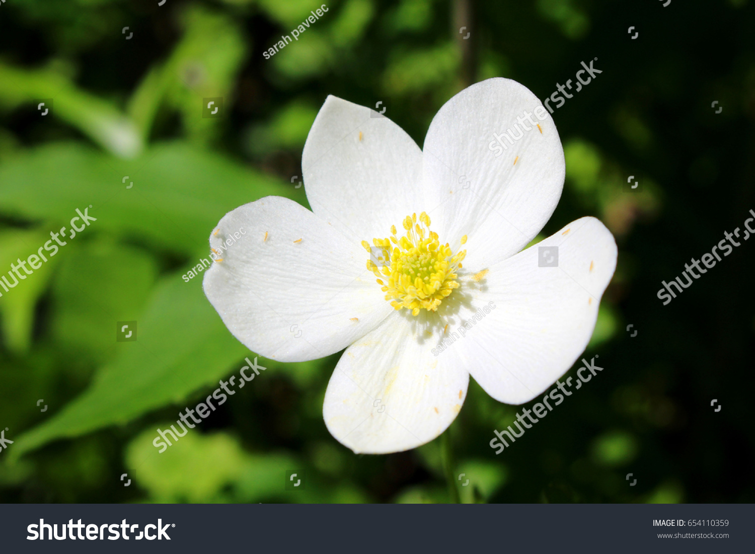 White Flower Yellow Middle Green Background Ez Canvas