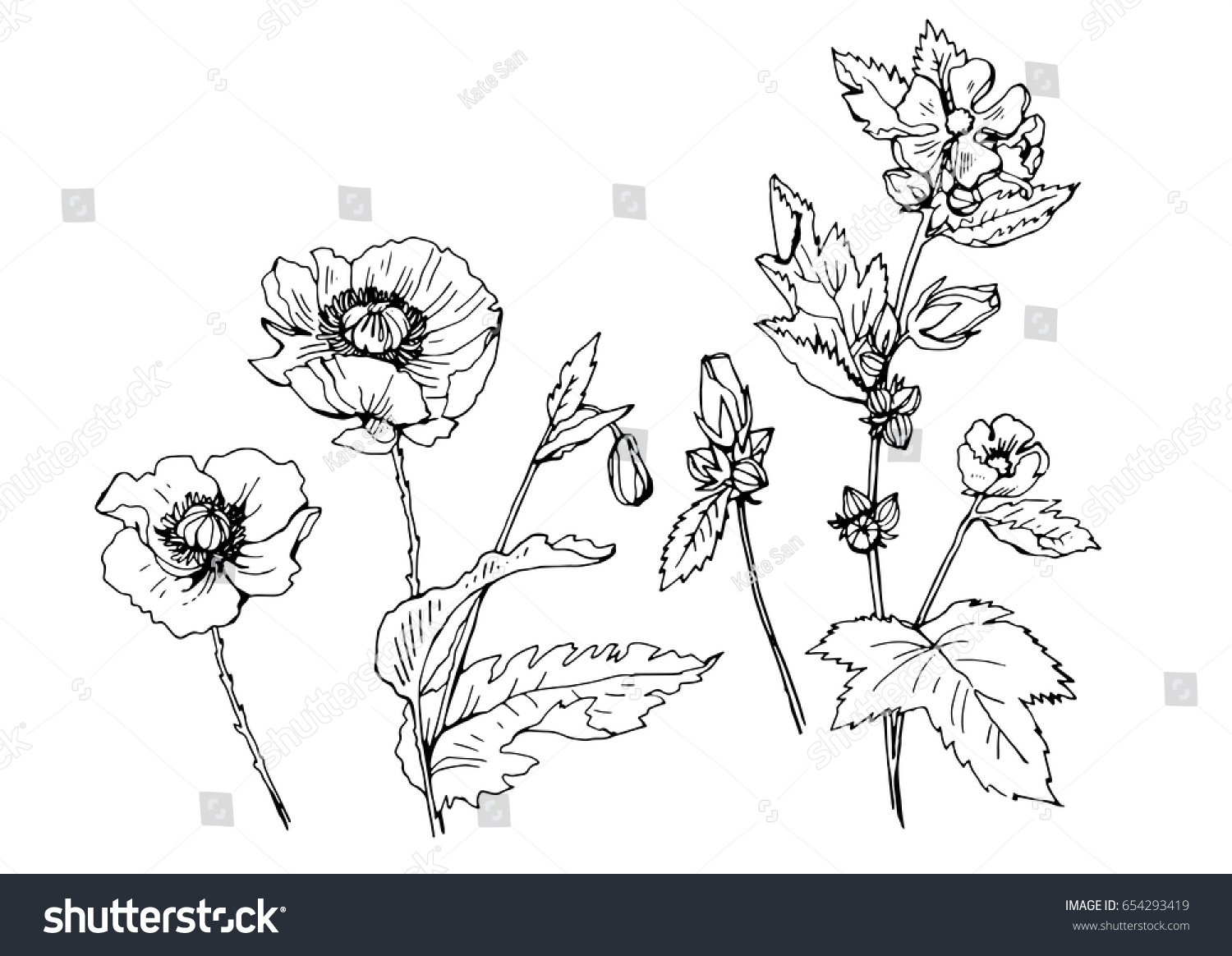 Vector Illustration Of Plants And Flowers Poppies Ez Canvas
