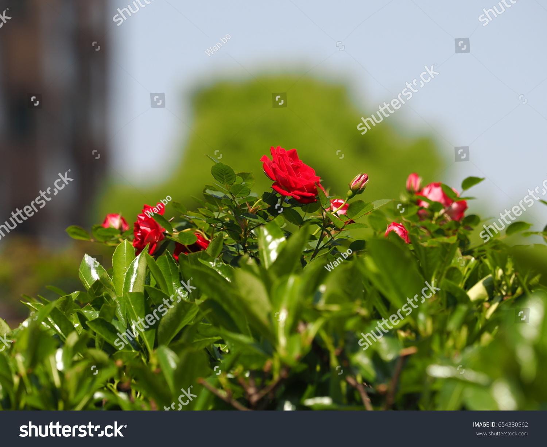 Colorful beautiful flowers blooming garden warm stock photo the colorful and beautiful flowers blooming in the garden with the warm spring sunlight izmirmasajfo Images