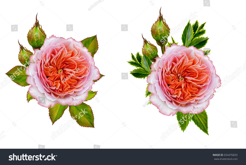Flower Arrangement Delicate Orange Pink Roses Stock Illustration