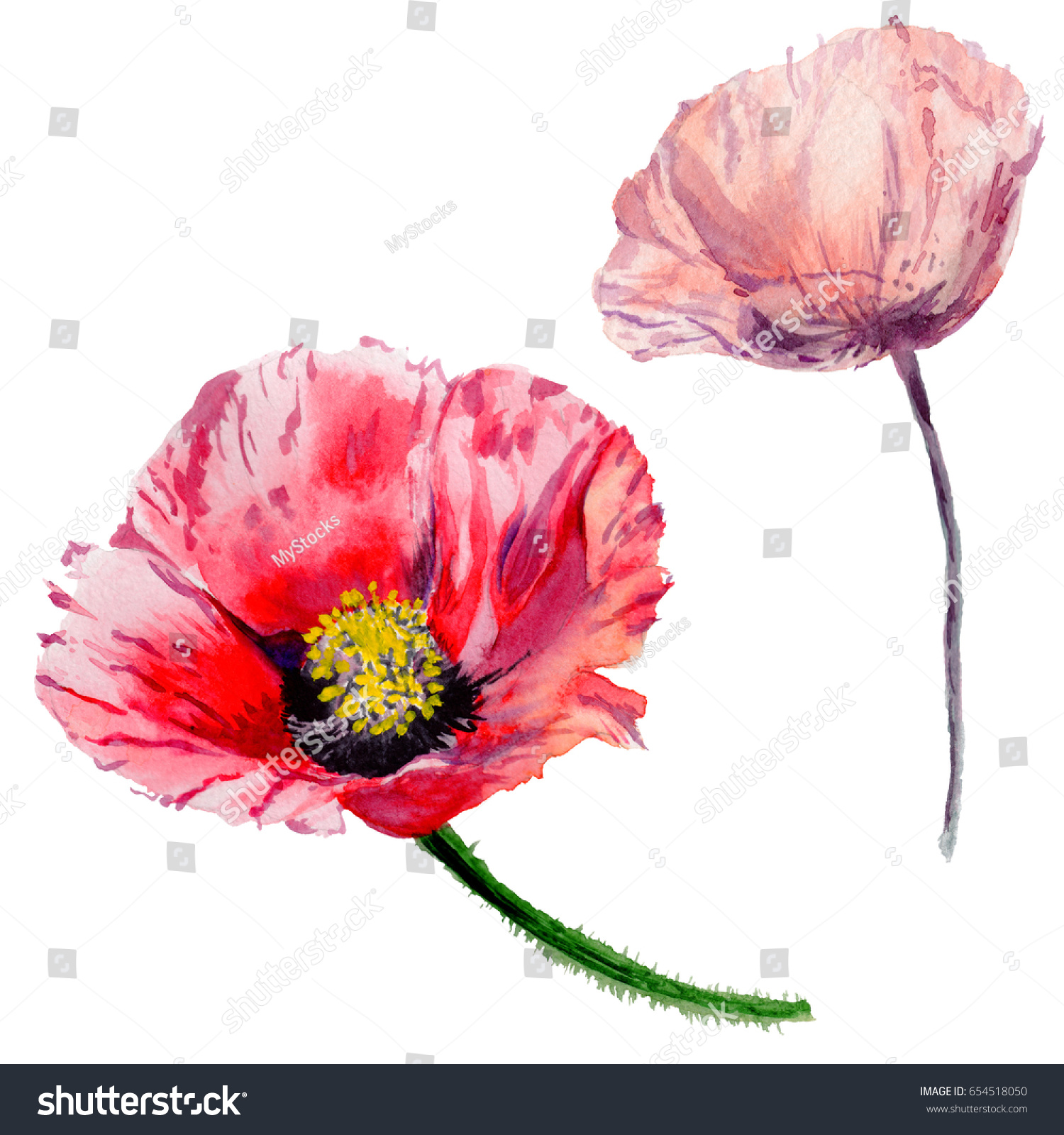 Wildflower Poppy Flower Watercolor Style Isolated Stock Illustration