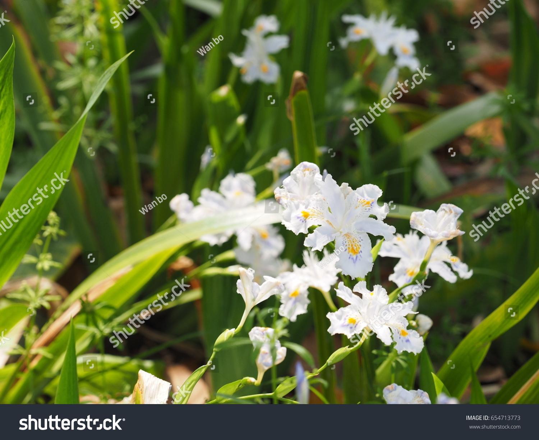 Beautiful flowers blooming garden warm sunlight stock photo the beautiful flowers blooming in the garden with the warm sunlight izmirmasajfo Images