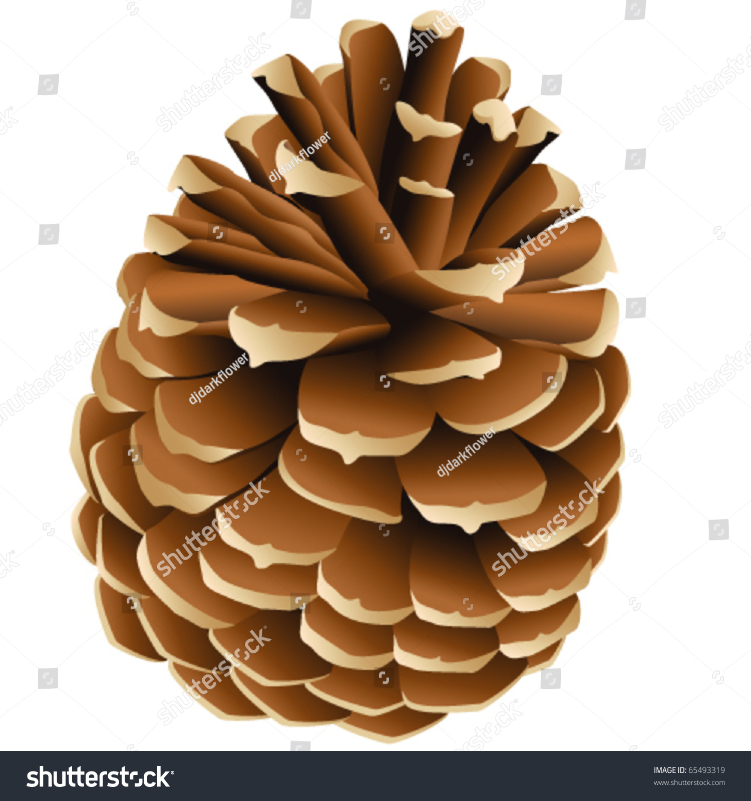 pinecone vector illustration stock vector 65493319