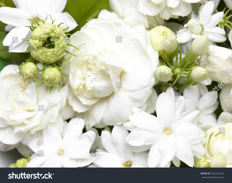 White jasmine flowers fresh flowers natural stock photo royalty white jasmine flowers fresh flowers natural backgrounds izmirmasajfo