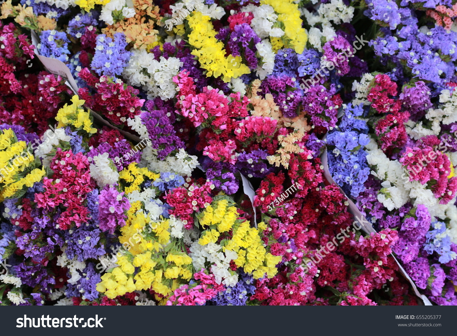 Colorful Small Dry Flower Yellow Pink Stock Photo Royalty Free