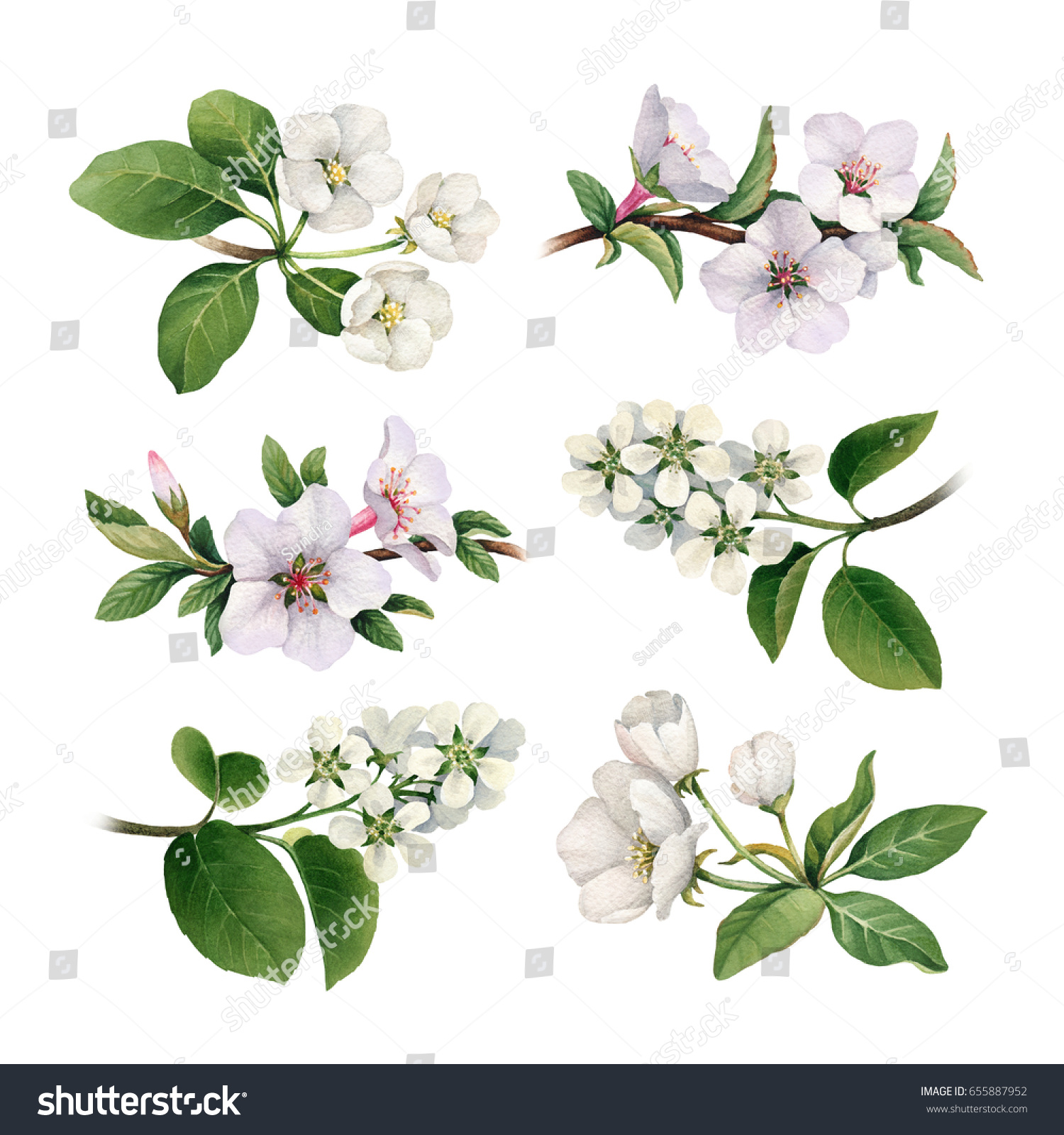 Watercolor Spring Flowers Blooming Trees Stock Illustration