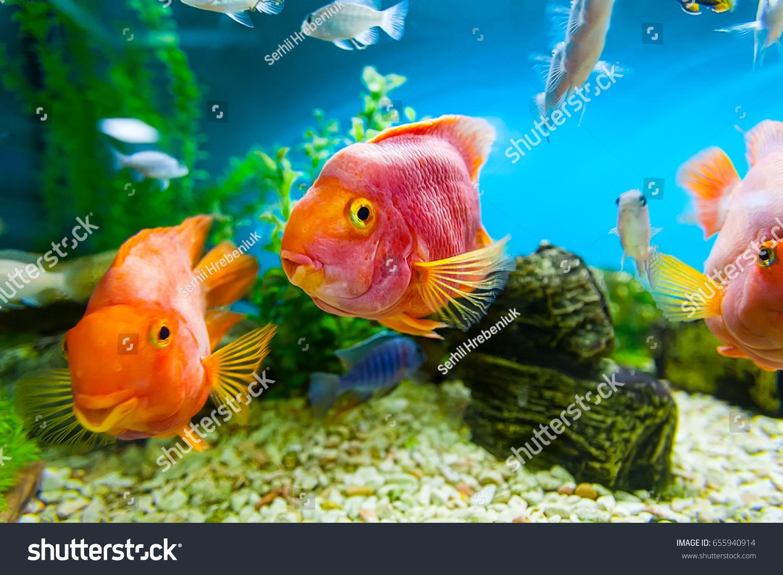 Aquarium Ocean Fishes There Three Big Stock Photo (Edit Now ...