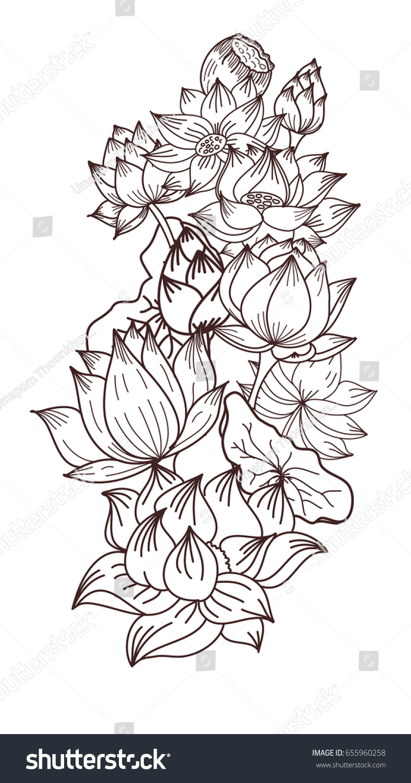 Hand Drawn Lotus Flowervector For Coloring Book Flower Of Buddha