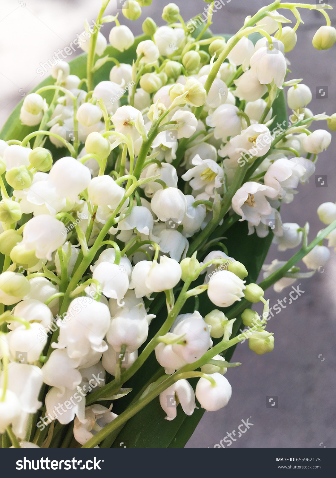 Lily valleys small white flower bells stock photo edit now lily of the valleys small white flower bells many lilies izmirmasajfo