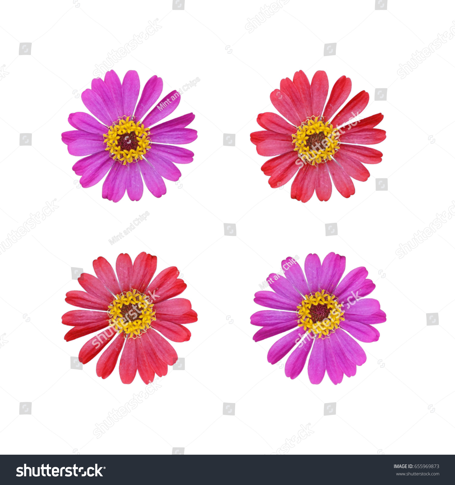 Separate pink red daisy flowers isolated stock photo edit now separate pink and red daisy flowers isolated on white background izmirmasajfo
