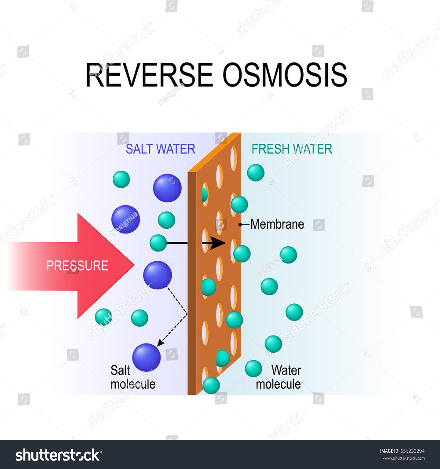Reverse Osmosis Desalination Pressure Water Molecules Stock Vector