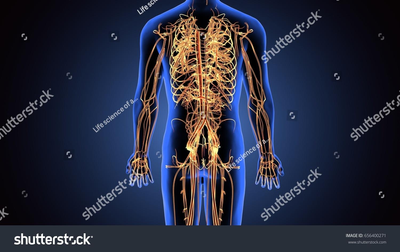 3 D Illustration Human Body Nerves System Stock Illustration