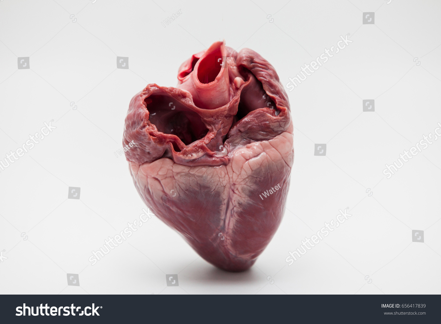 Pig Heartsraw Pig Heart Closeup Isolated Stock Photo 100 Legal