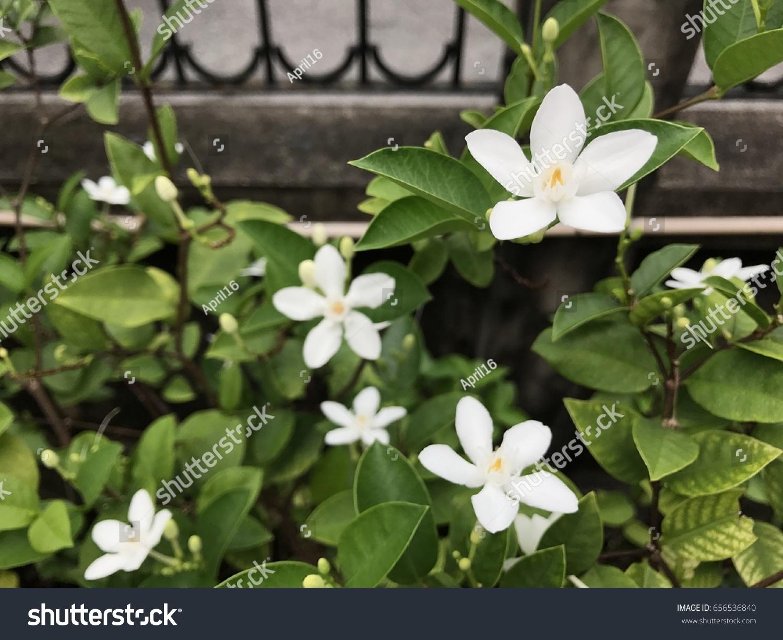 Flowers White Stock Photo Edit Now 656536840 Shutterstock