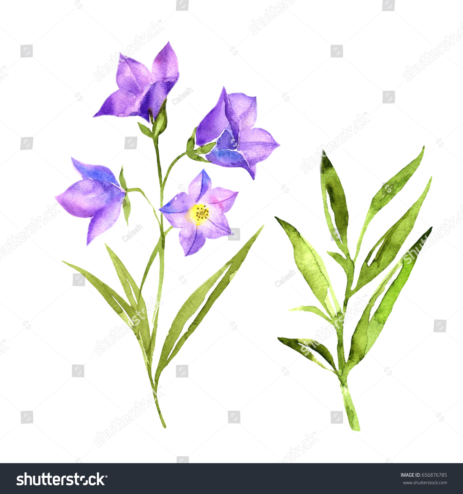 Hand Drawn Bluebells Flowers Grass Watercolor Stock Illustration