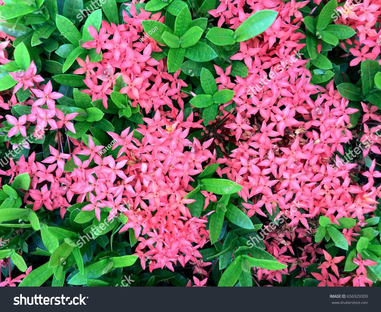 Pink Spike Flower Stock Photo Edit Now 656929309 Shutterstock