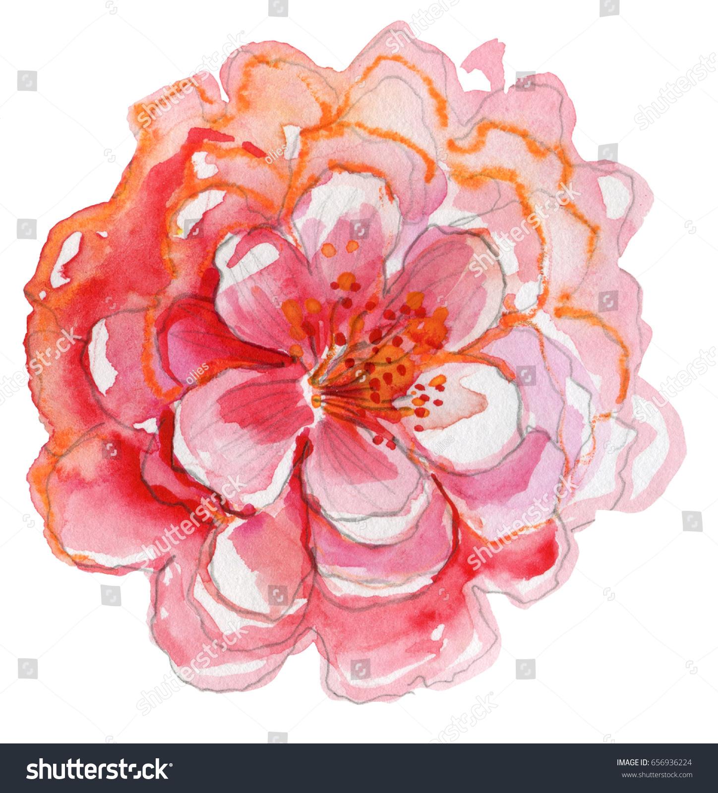 Big Pink Flower Watercolor Illustration Floral Stock Illustration ...