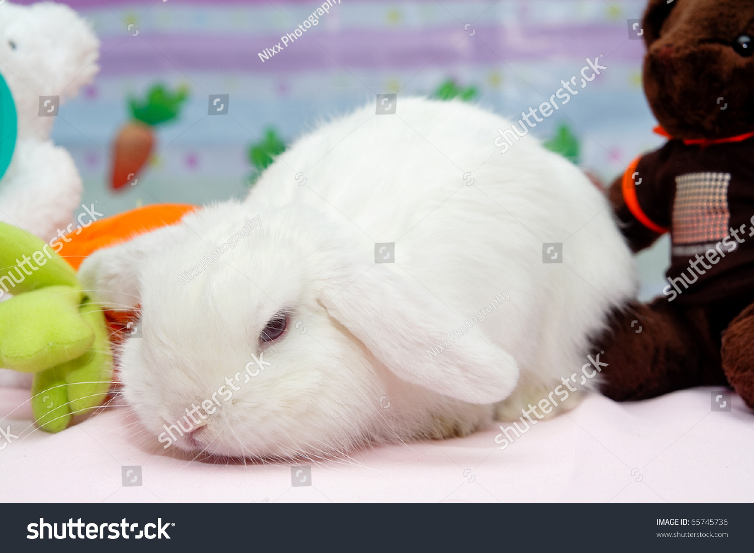 Really Cute White Rabbits
