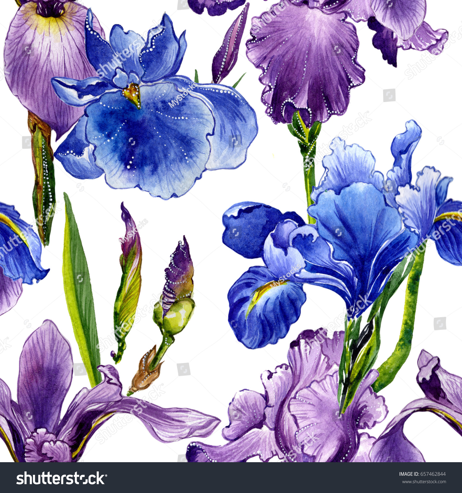 Wildflower iris flower pattern watercolor style stock illustration wildflower iris flower pattern in a watercolor style isolated full name of the plant izmirmasajfo