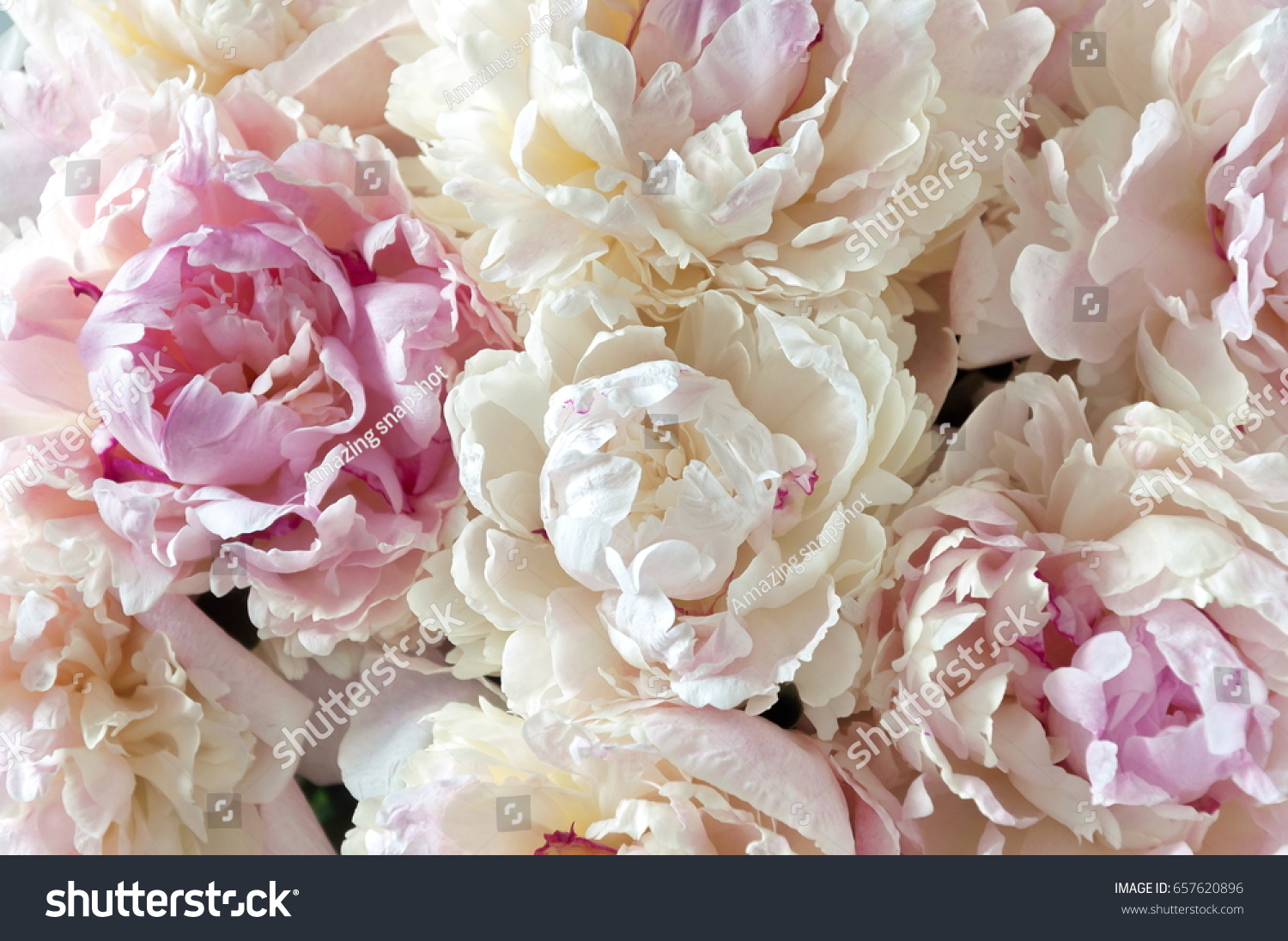 Floral background pink white peonies pattern stock photo edit now pink and white peonies pattern bouquet of peonies flower light texture mightylinksfo