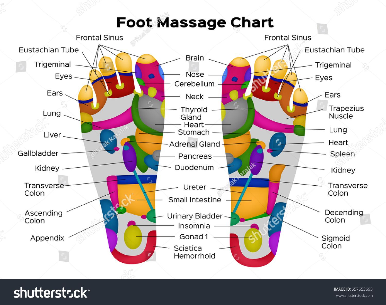 Foot Reflexology Chart Description Internal Organs Stock