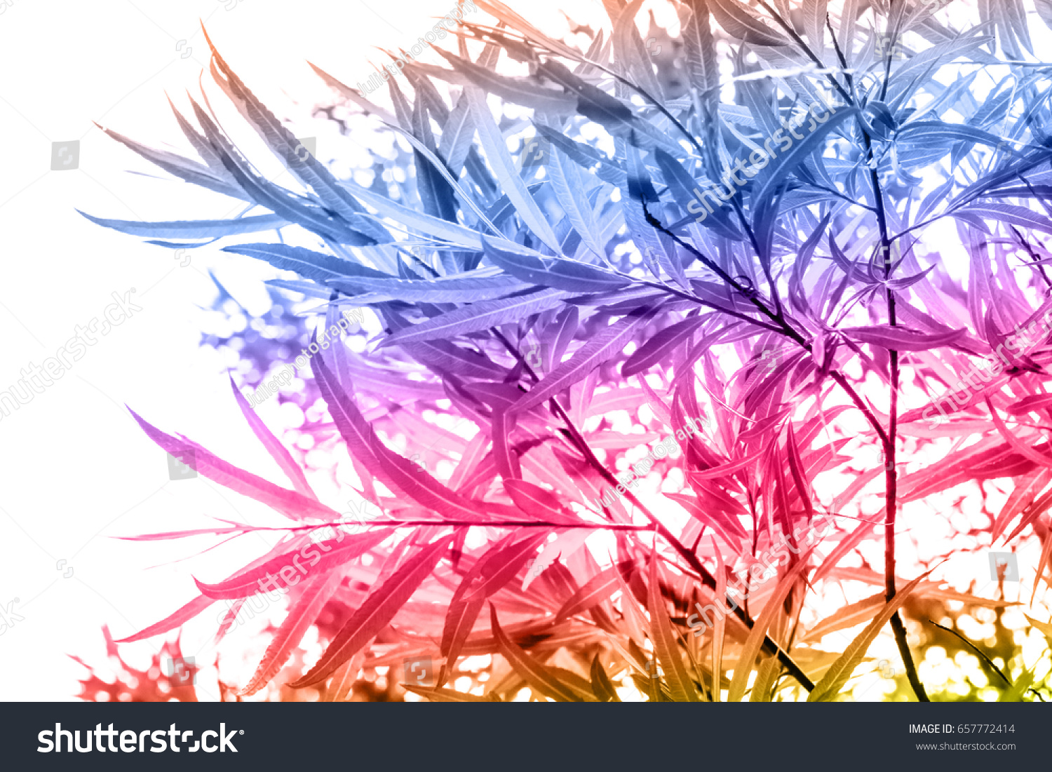 Bamboo Plants Colorful Artistic Background Stock Illustration ...